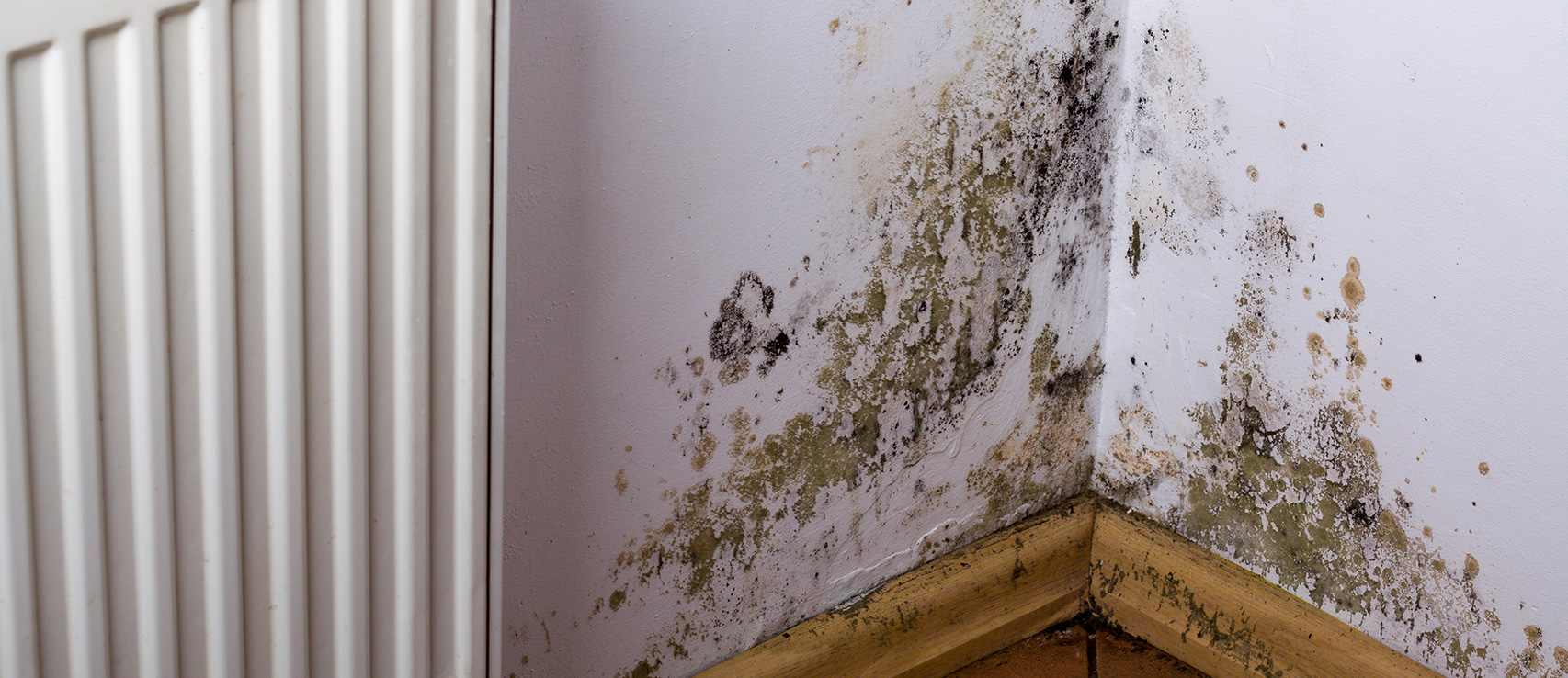 Truth About Mold